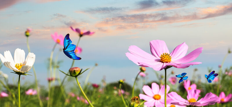 La Primavera è alle porte è il momento di Dimagrire